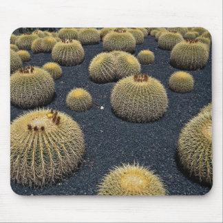 Cactus, echinocactus grusonii mousepad