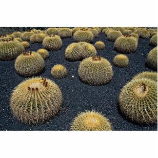 Cactus, echinocactus grusonii photo sculpture