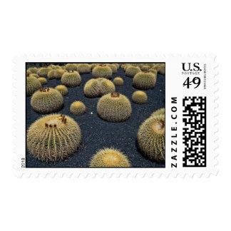 Cactus, echinocactus grusonii stamps