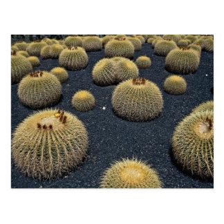 Cactus, echinocactus grusonii post card