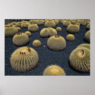 Cactus, echinocactus grusonii print