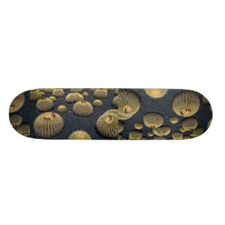 Cactus, echinocactus grusonii skate board deck