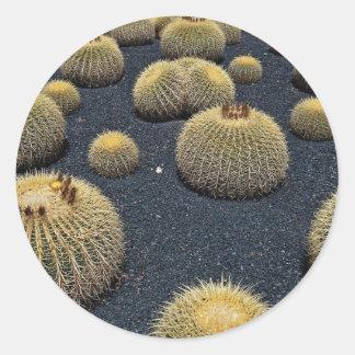 Cactus, echinocactus grusonii round sticker