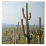 Cactus en el parque nacional de Saguaro, Arizona 2 Azulejo