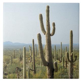 Cactus en el parque nacional de Saguaro, Arizona 2 Azulejo Cuadrado Grande