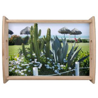 Cactus en la bandeja de la porción de México de la