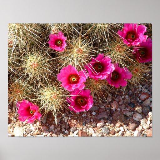 Cactus en la floración posters