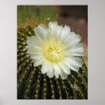 Cactus en la impresión de la floración posters