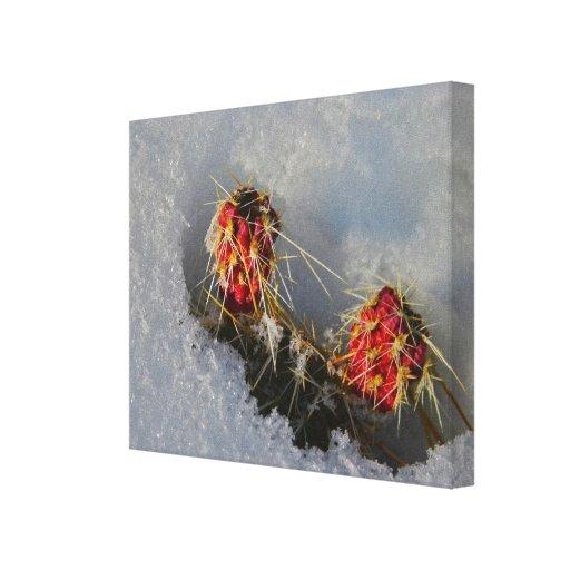 Cactus en la nieve lona envuelta para galerías