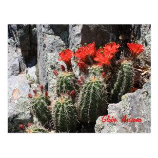 Cactus en la roca tarjeta postal