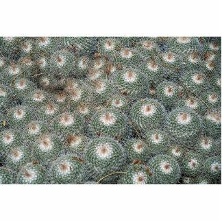 Cactus en los jardines botánicos del desierto, fotoescultura vertical