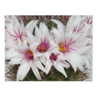 Cactus Floral Blossoms Destiny Gardens Postcard