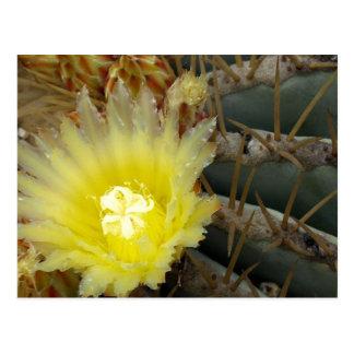 Cactus floreciente amarillo postal