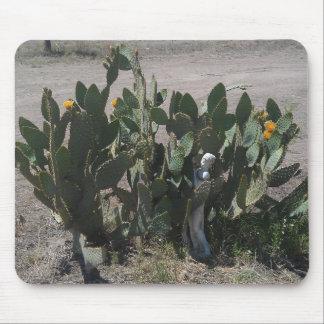 Cactus floreciente de Tejas con la estatua Tapete De Raton