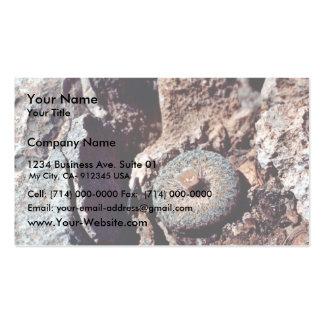 Cactus floreciente del botón tarjeta de visita