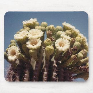 cactus floreciente del desierto