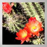 Cactus floreciente en la noche póster