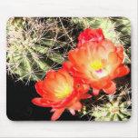 Cactus floreciente en la noche tapetes de raton