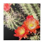 Cactus floreciente en la noche teja  ceramica