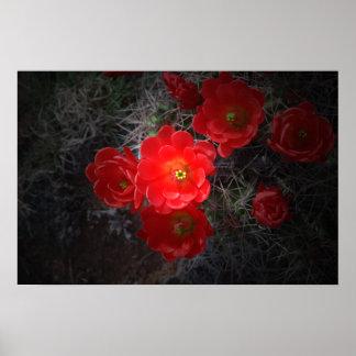 Cactus floreciente, lona póster