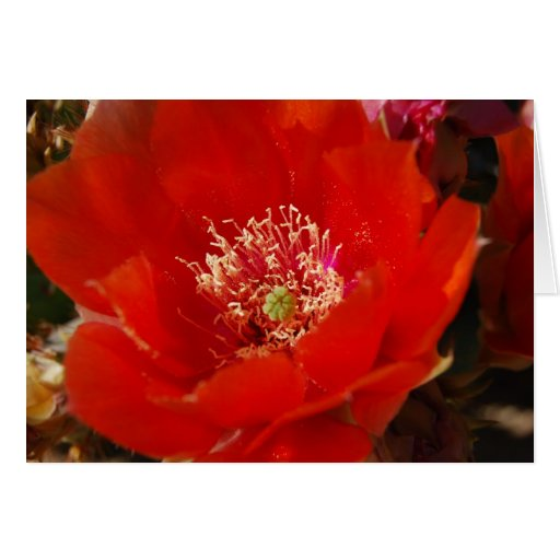 Cactus Flower 12 Greeting Card
