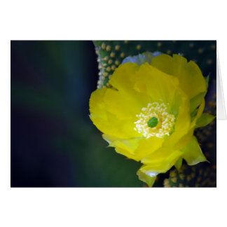 Cactus flower and meaning greeting card