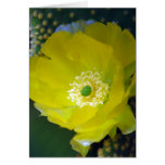 Cactus flower and meaning cards