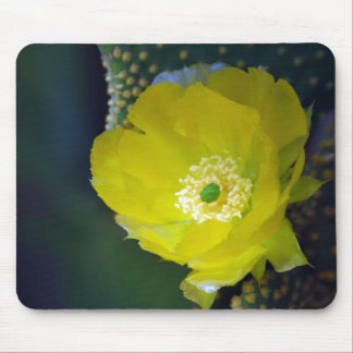 Cactus flower and meaning mousepad