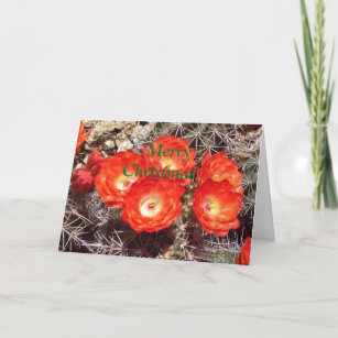 cactus flower christmas card - Humane Society Christmas Cards