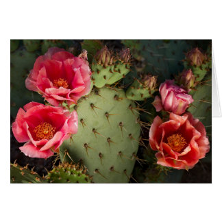 Cactus Flower Custom Greeting and Notes Cards