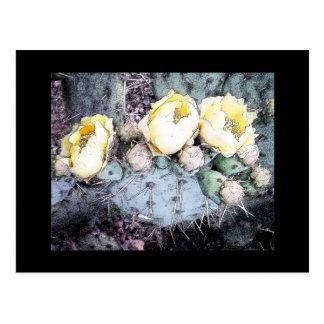 Cactus Flower Digital Ink Postcard