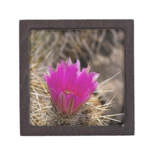 Cactus Flower Gift Box