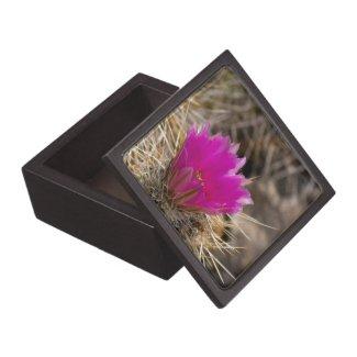 Cactus Flower Gift Box Premium Gift Box
