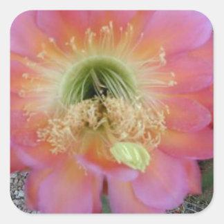 Cactus Flower in Arizona Square Sticker