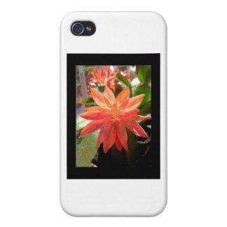Cactus Flower iPhone 4/4S Cases