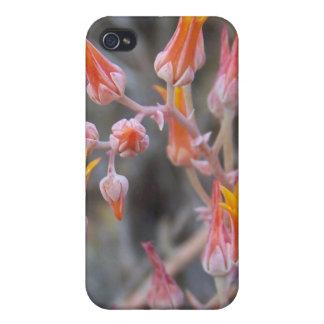 Cactus Flower iPhone 4 Cover