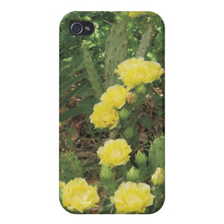cactus flower iphone case case for iPhone 4