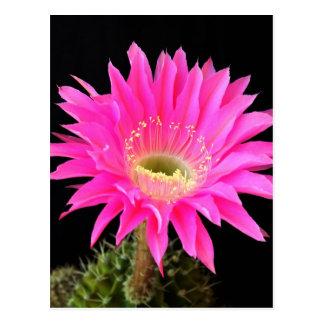 cactus flower Open for Love Postcard