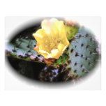 Cactus Flower Personalized Flyer