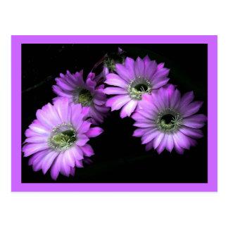 Cactus Flower Post Cards