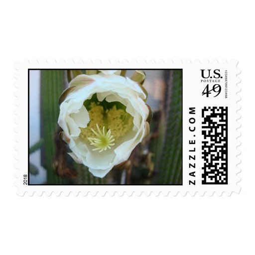 Cactus flower postage stamps