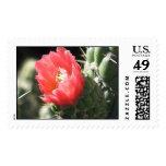 Cactus Flower Stamp