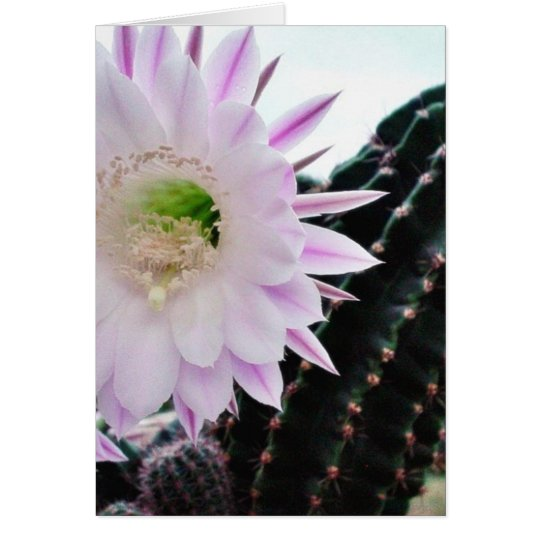 Cactus Flower White Card