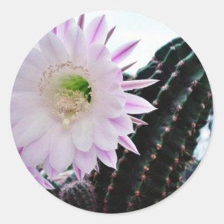Cactus Flower White Classic Round Sticker