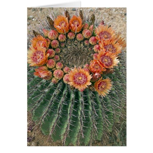 Cactus Flowers 002d Greeting Card