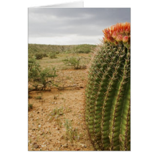 Cactus Flowers 007 Greeting Card