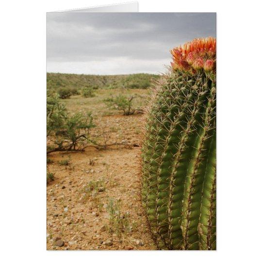 Cactus Flowers 007 Card