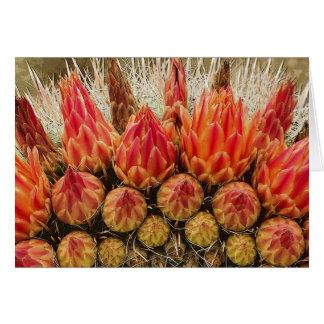 Cactus Flowers 012j Card