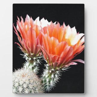 Cactus Flowers Display Plaque
