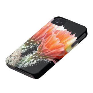 Cactus Flowers iPhone 4 Cases
